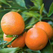 mandarina-5g-03