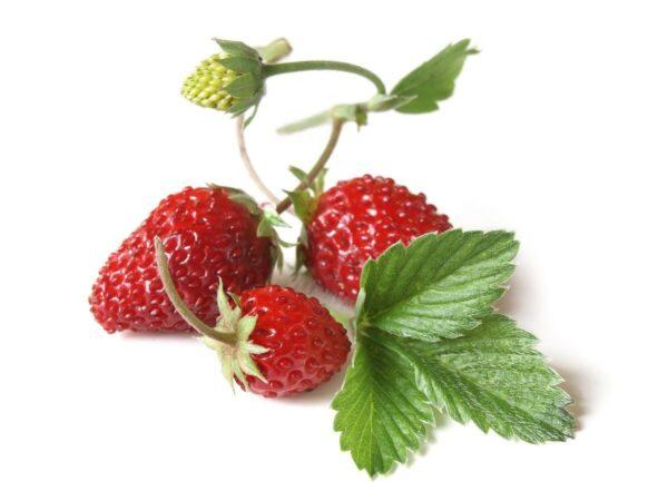 semena-za-pametni-vrt-jagode-1