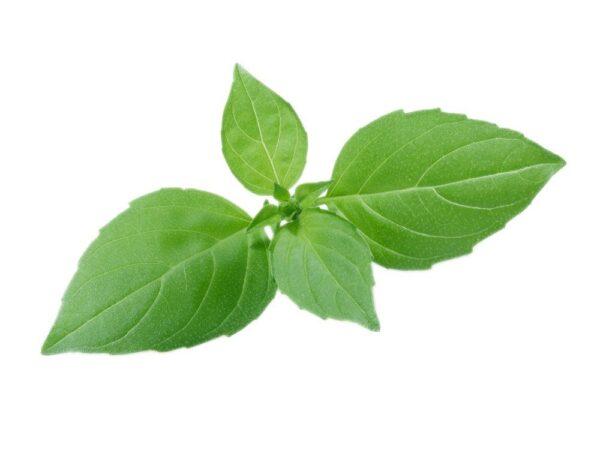 semena-za-pametni-vrt-limonina-bazilika-1