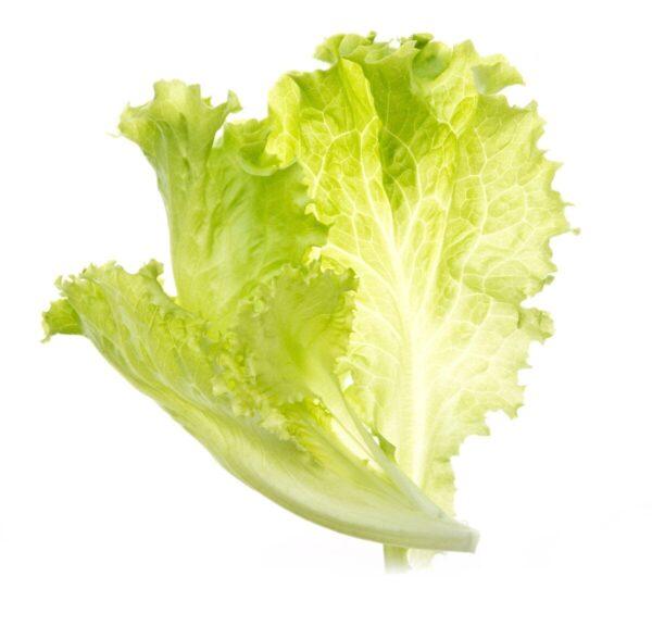 semena-za-pametni-vrt-solata-1