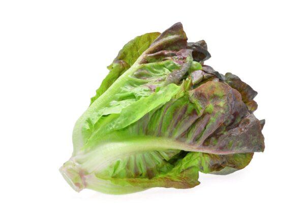 semena-za-pametni-vrt-solata-2