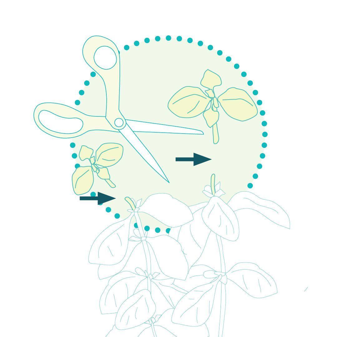 Pametni vrt - nasveti za pobiranje pridelka